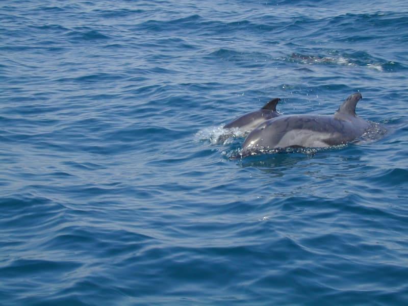 delfins4